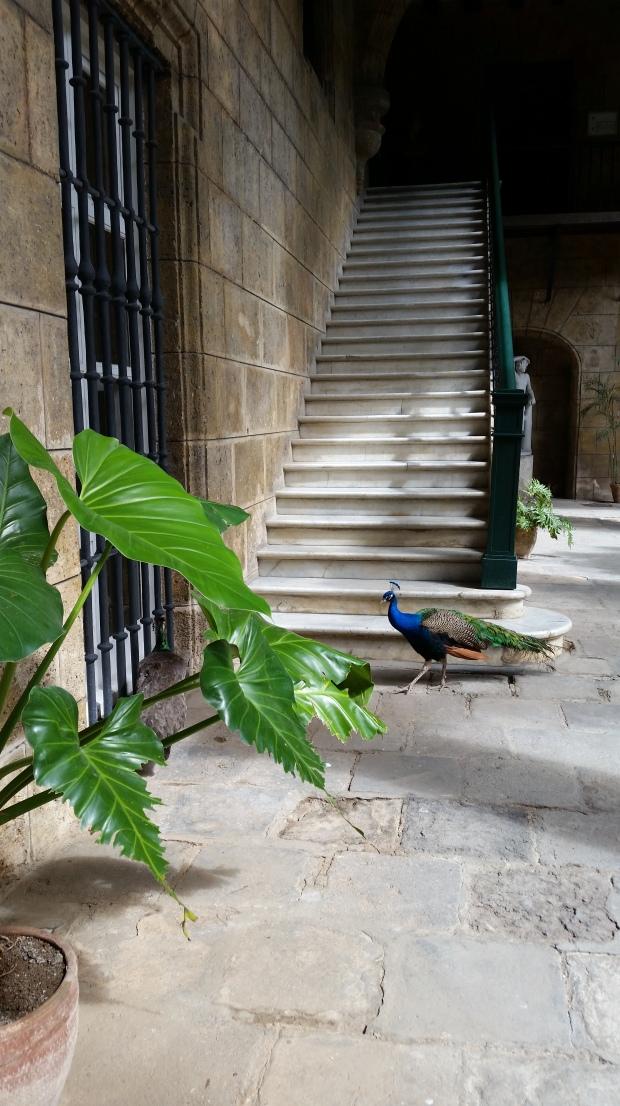 Museo de Arte Colonial Havana Cuba