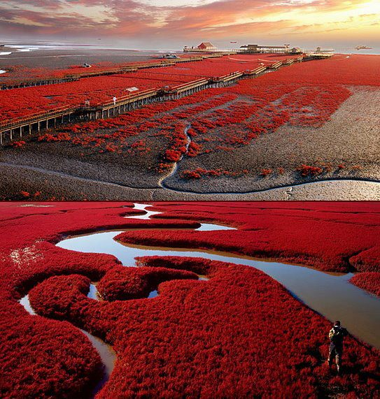 4Panjin-Red-Beach-7