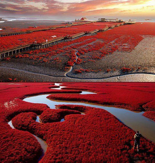 4Panjin-Red-Beach-7