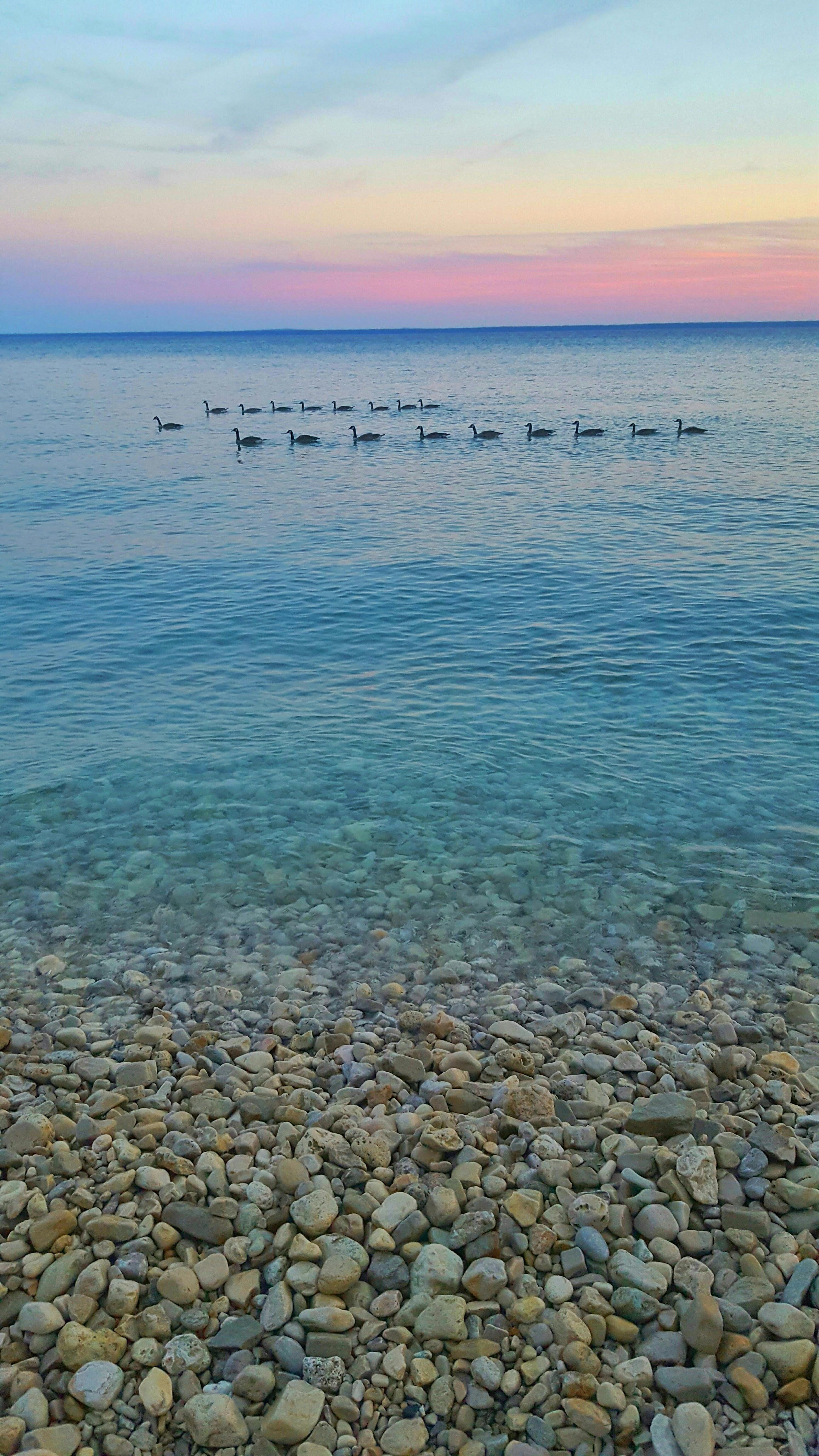 Geese in Lake Huron at sunset, Mackinac Island, Michigan