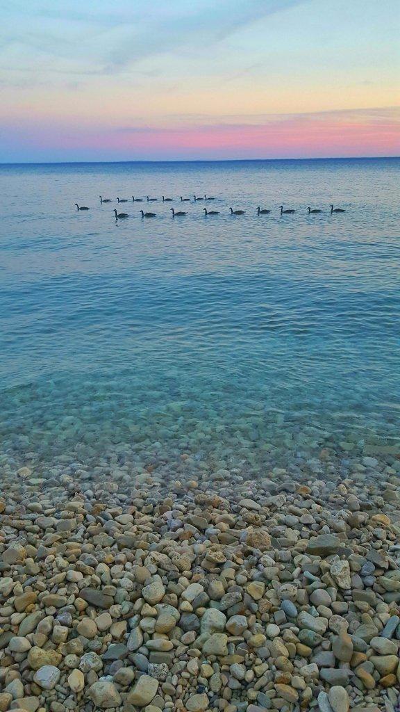 Geese in Lake Huron at sunset, Mackinac Island, Michigan