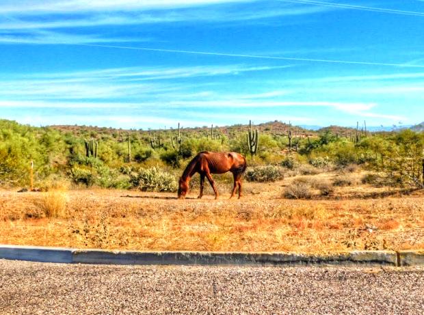 Wild Horse, Salt River, Arizona