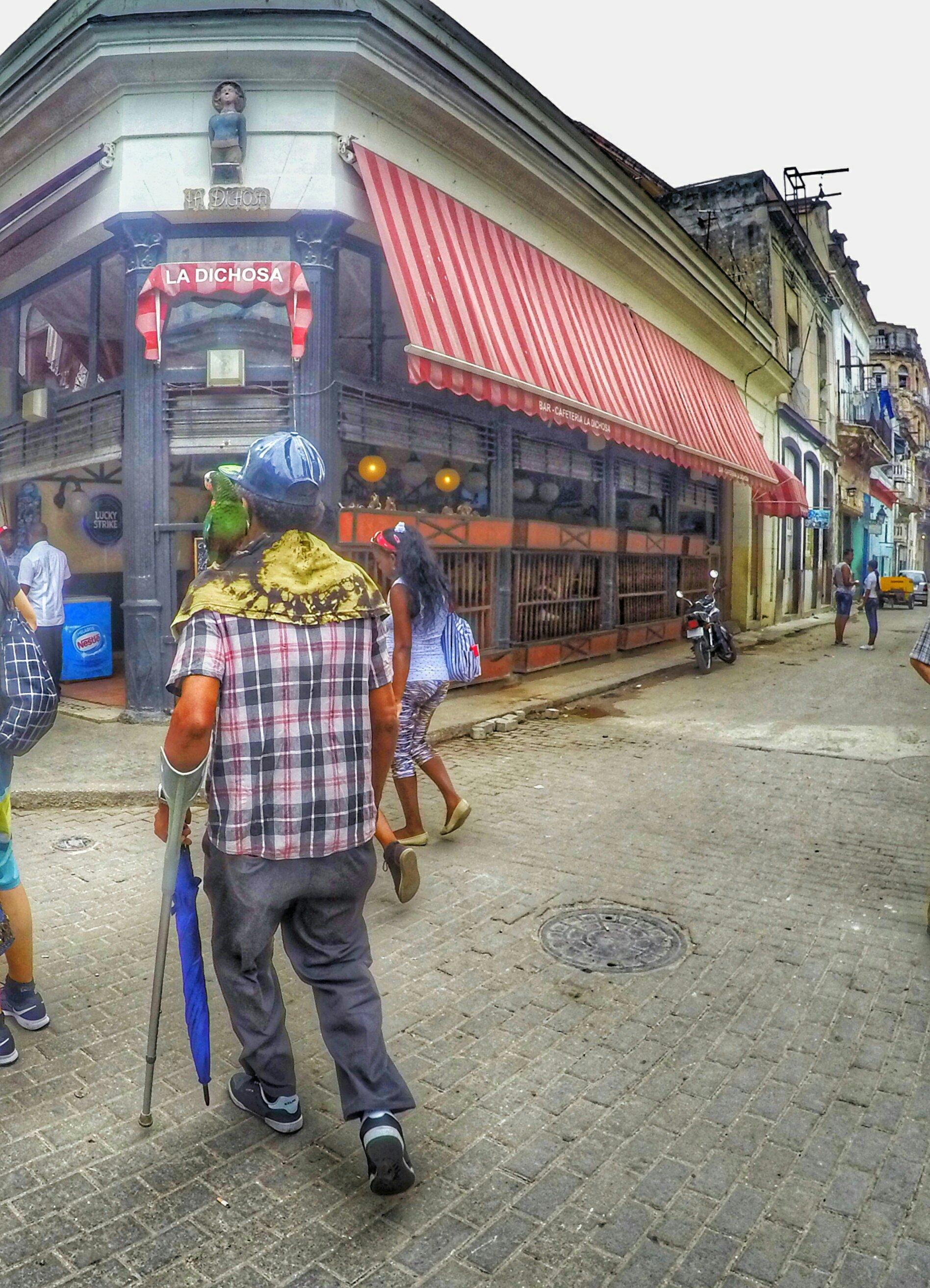 Man walking with parrot - Havana, Cuba