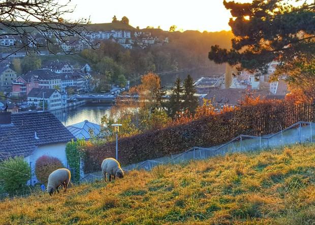 Overlooking Rhine River