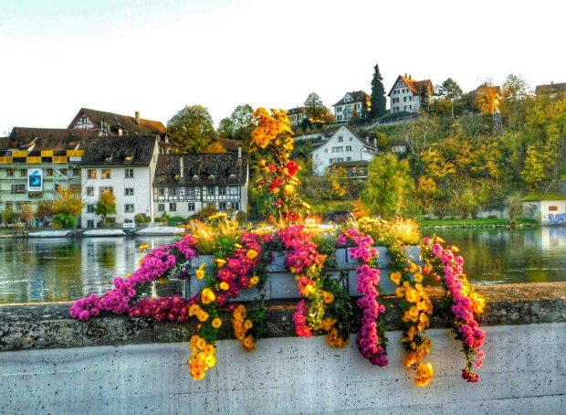 Flowers on Rhine River