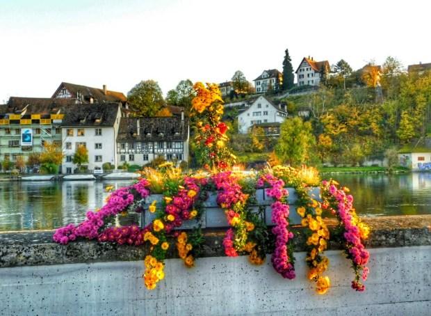 Flowers on Rhine River